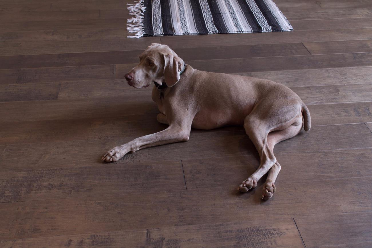 Dogs, Kids, and Crocodiles oh MY! A Guide to High Durability Flooring